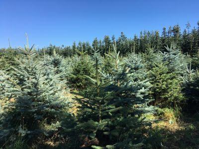 Weihnachtsbaumland